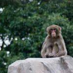 人間らしい職場と猿山|理解不能な反応のメカニズムを探る