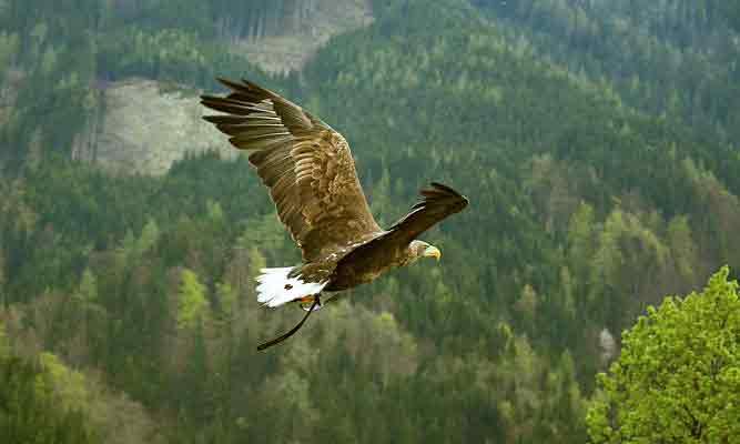 鷲のように余裕を持って鳥瞰する
